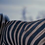 Africa Hunt