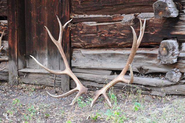 Shed hunting in the Gila
