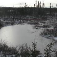 Wintry swamp. Photo: Peupleloup