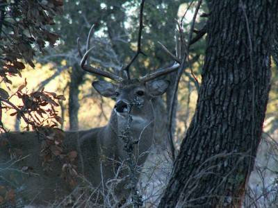 Buck. Photo: Clint and Charles Robertson