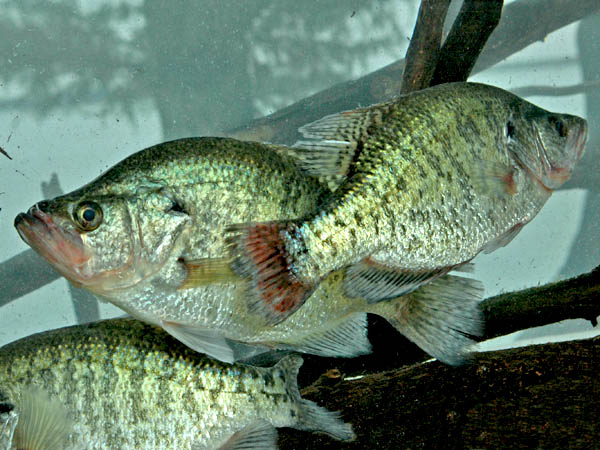 Best fall and winter fishing tennessee oklahoma and for Best fishing in missouri