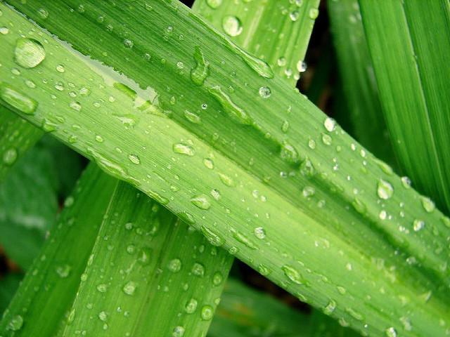 Dewy vegetation