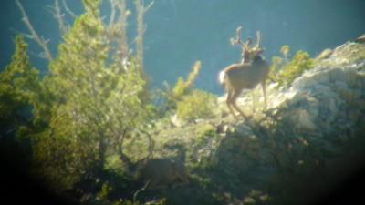 Quick shot of a buck