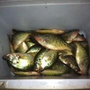 Missouri Crappie Fishing