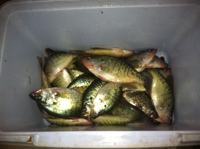 Cabin fever at its finest winter time missouri crappie for Crappie fishing in missouri