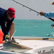 Rich Tudor helping land a shark