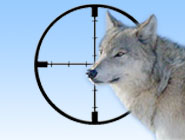 Anti Wolf-Hunting Groups Plan to Disrupt Lottery