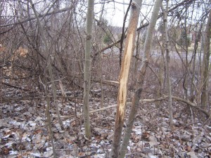 Better Deer Hunting Through Shed Hunting
