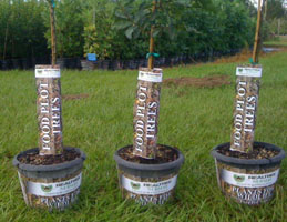 Realtree Nursery Food Plot Trees Now Available at Wal-Mart