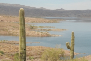 Public input sought on proposed changes to 2013 14 arizona for Arizona fishing regulations