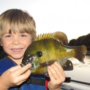 Magnum spring bluegills make for excellent angling opportunities