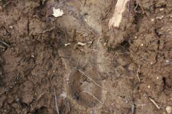 Possible Bigfoot print found on 3/18/12 in the WNY Area ?