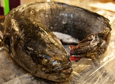 Snakehead fish caught in Central Park pond in Burnaby is being analyzed by Simon Fraser University and other researchers.