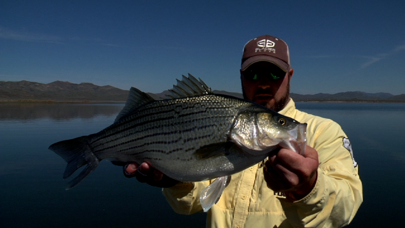Wiper bass on the fly at southfork reservoir nevada for Nevada game and fish