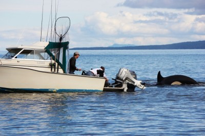 Greg Beldham inspecting the seal after it hopped on his boat. Image copyright Kelly Aspinall/BCTough.com