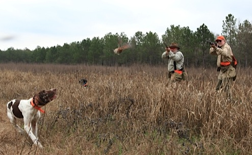 Benelli On Assignment: Georgia Quail & Team Benelli 3-Gunners