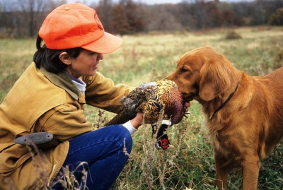 Hunting pheasant with a dog
