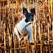 Konway dog