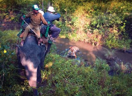 IndiaTiger_on_Elephant_safari_vsm