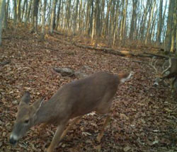 missed-whitetail-opportunities1 (2)