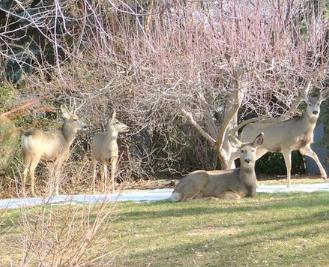 post-rut-deer-hunting