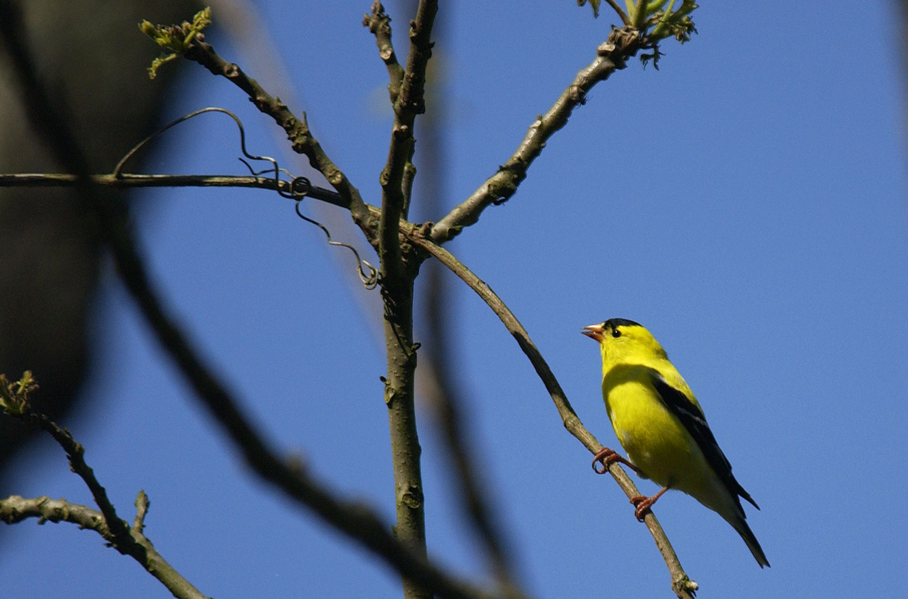 West Virginia Great Backyard Bird Count at State Parks ...