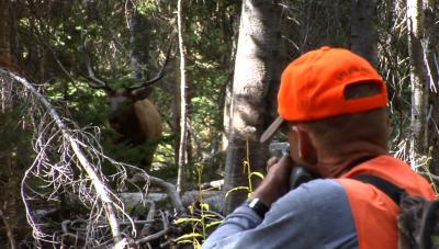 elk hunt close