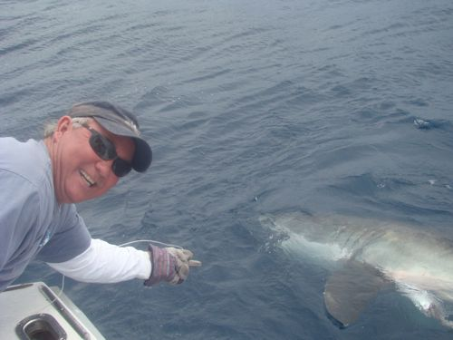 Anglers 39 mystery fish turns out to be 1 000 pound great for Florida shark fishing charters