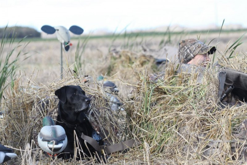 Much like sighting in a new gun before venturing out on a hunt, you should take a few steps to prepare your layout blind before hitting the field.