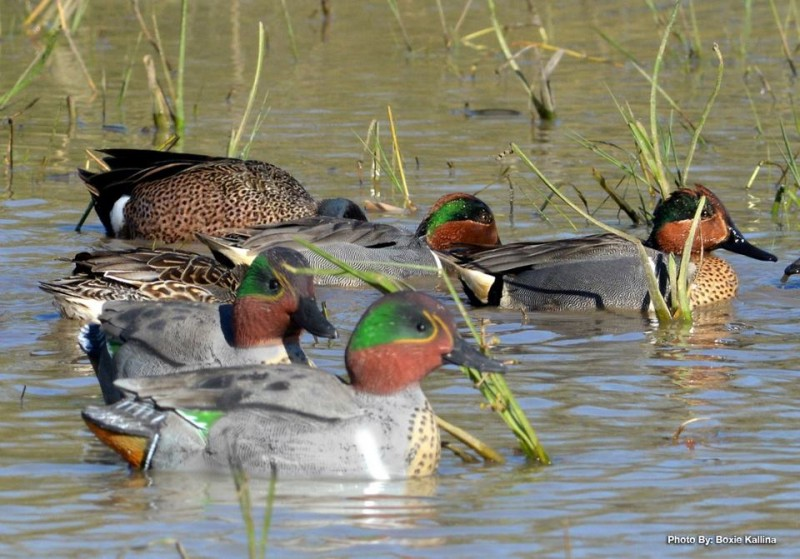 All duck decoys have to be rigged before you can use them. Some rigging varieties are MUCH easier than others.