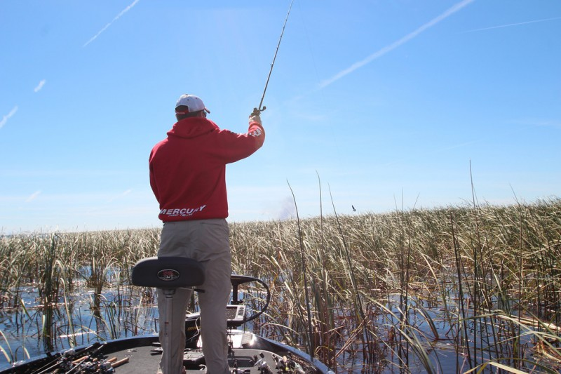 Grassy water can be great places to find bass in the summer months.