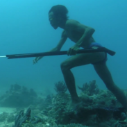 This Bajau fisherman's only modern equipment consists of a speargun and goggles. No air tank is needed for this sea bed fishing expedition.
