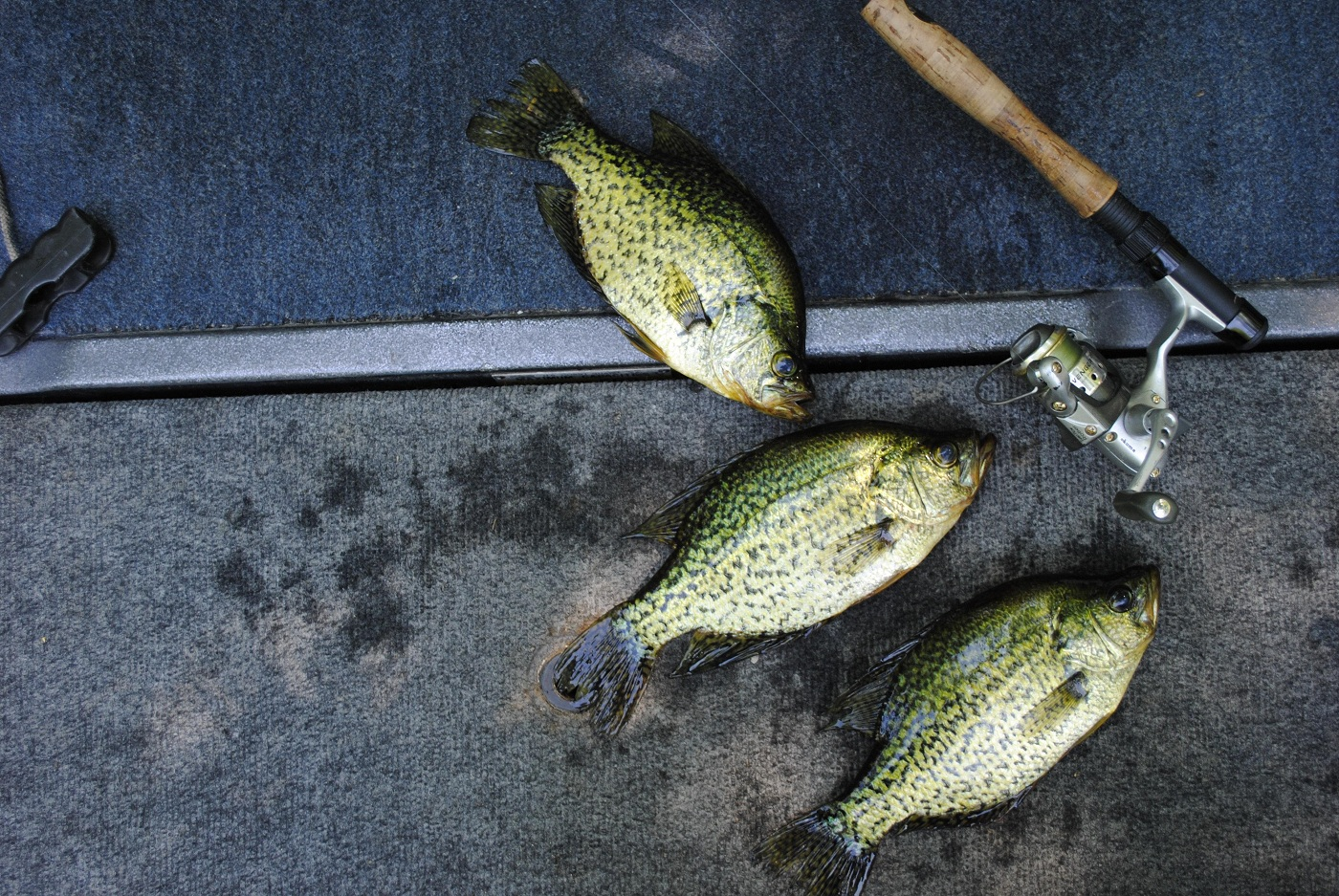 how to find crappie in summer