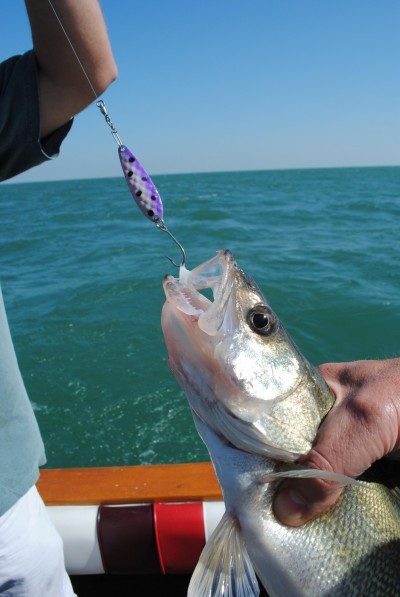 Spoons are the go-to bait when walleyes are deep at Lake Erie.