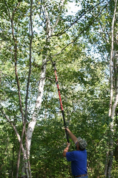 Trim shooting lanes to make sure you have clear shots to the bear. Shot opportunities may be short, so it's a good idea to have clear paths from your stand to the bait.