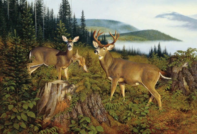 Though he had successfully taken a young blacktail buck on Lopez Island, Dennis Dunn still sought a true Columbia blacktail trophy buck. Illustration by Hayden Lambson.