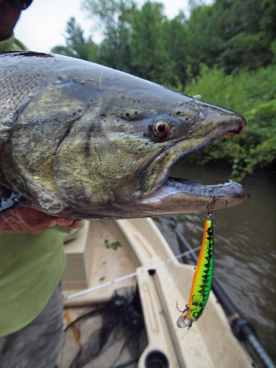 This time of the year is perfect for catching brawny Great Lakes Chinook salmon.