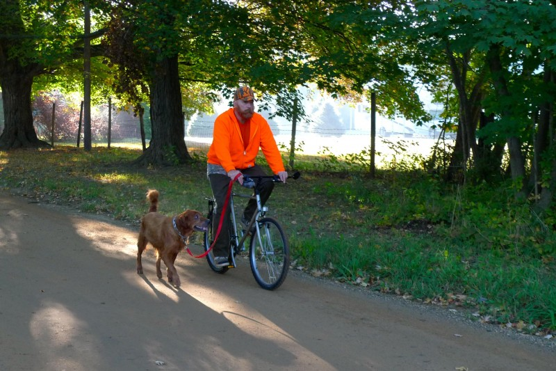 Bicycling with your dog is a great way to pack a good workout into a short amount of time. Just make sure he knows how to heel.