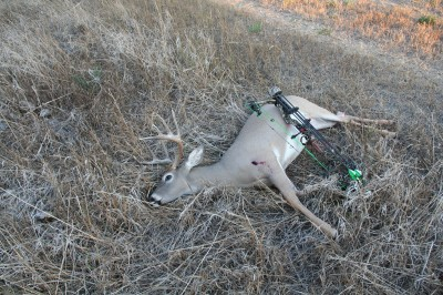 The author shot this nice 10-point buck on the third day of archery season in 2012. Being in the right place at the right time is a result of effective scouting.