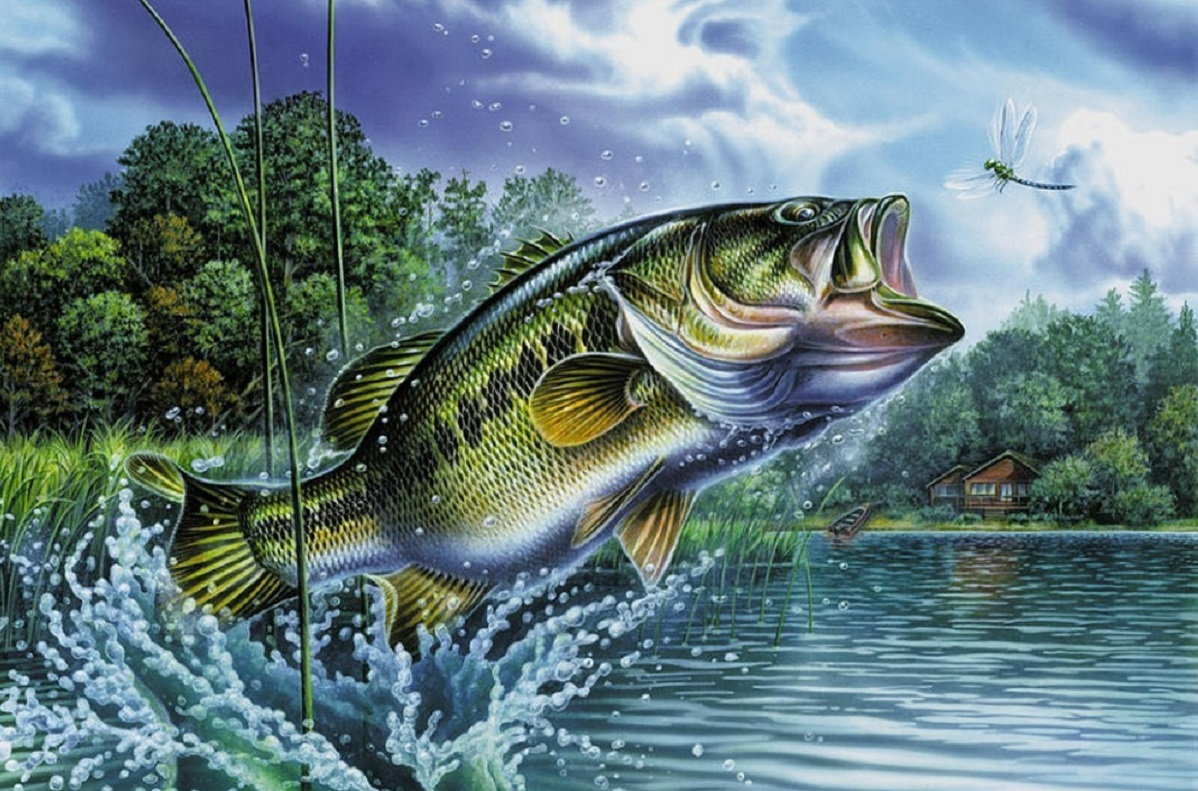 the origin of the iconic bass art work outdoorhub