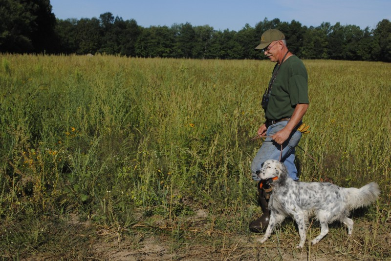 Dog trainer Tim Fox says every session with a bird dog should start off with the dog on a lead.