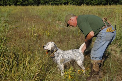 Tim Fox steadies an English setter on point during a training session.