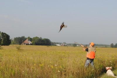 A pheasant takes to the air at Haymarsh Hunt Club.