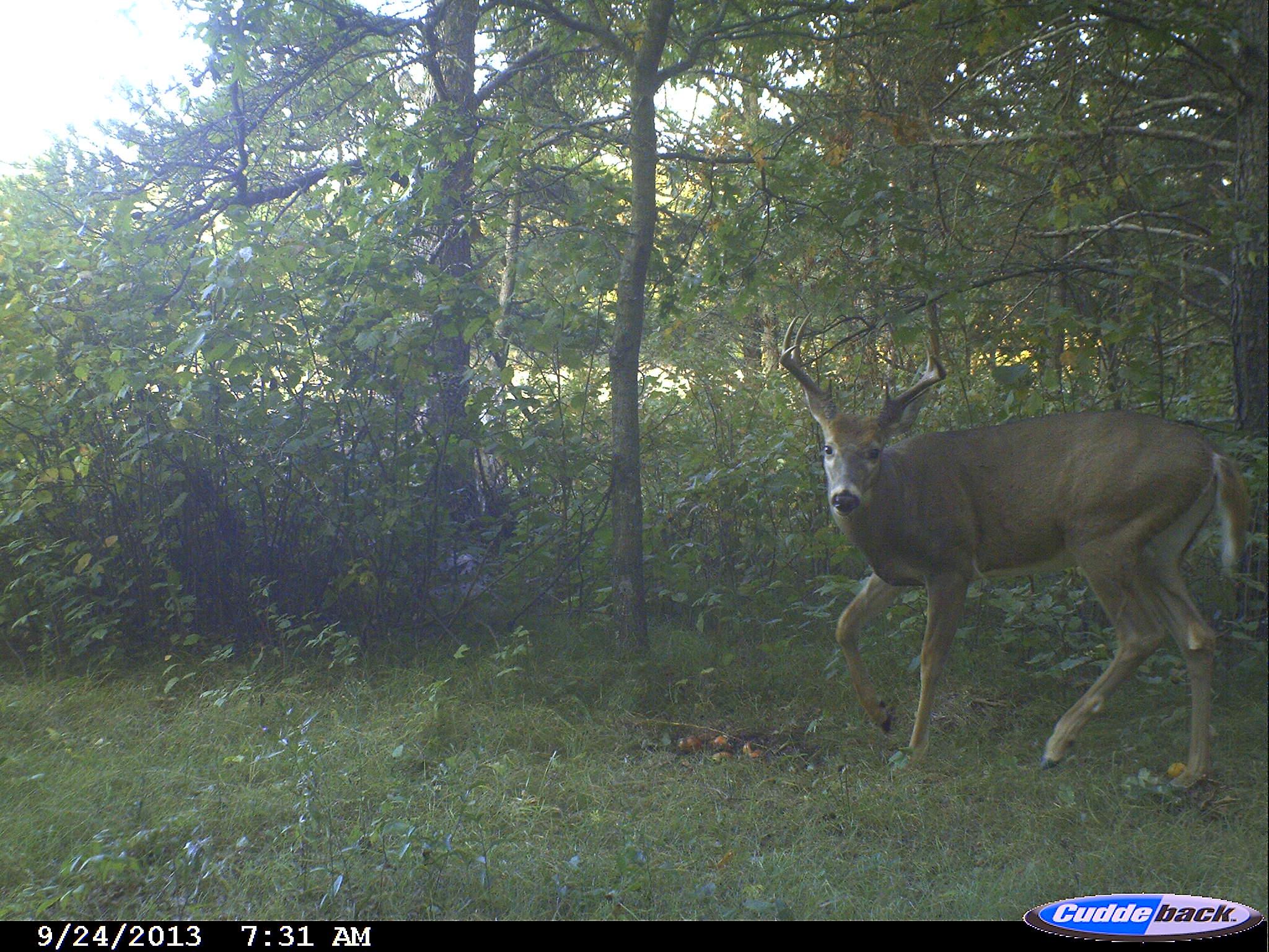 Deer Hunting Morning Or Evening Outdoorhub