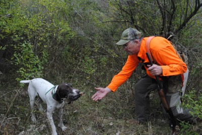 Chuck Riley gets a woodcock from his German shorthair, Geena.