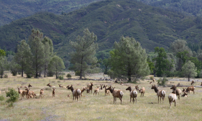 Mendocino National Forest consists of over 900,000 acres of pristine wilderness. The forest is known for its large population of deer and tule elk.
