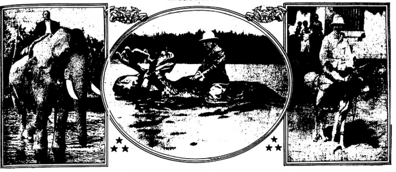 A scan of the original cartoon shows that Roosevelt and his moose takes center stage.