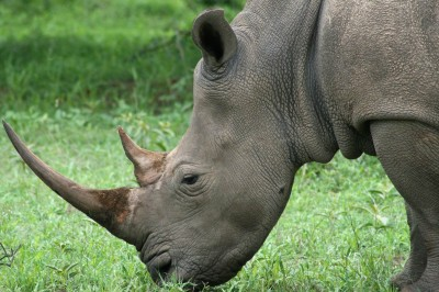 Presentations about legal mechanisms for rhino horn and ivory trade were among the discussions at the 12th annual AWCF.