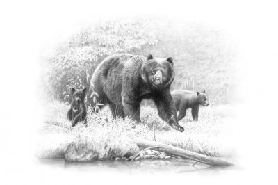 Dunn remarks that unlike cats, black bears are rarely killed by curiosity. Illustration by Dallen Lambson.
