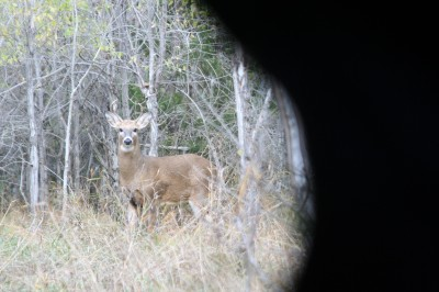 To remain hidden in a blind, you must eliminate light and minimize movement. A deer will pick up on any movement inside the blind.